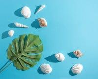 Composição criativa com conchas do mar e folha de palmeira tropical no fundo azul pastel Conceito mínimo do verão fotografia de stock