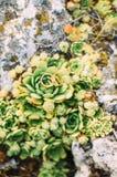 A composição da aliança de casamento dourada que encontra-se no verde floresce groqing das rochas Imagem de Stock