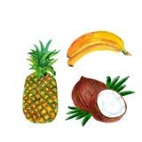 Composição da aquarela com frutos tropicais banana, abacaxi e coco isolados no fundo branco ilustração royalty free