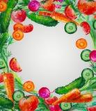 Composição da aquarela com ilustração dos vegetais Fotografia de Stock