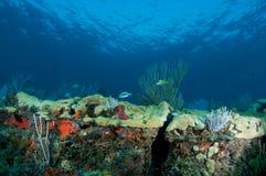 Composição da borda do recife. Foto de Stock Royalty Free