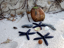 Composição da estrela do mar e do coco Fotografia de Stock