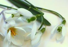 Composição da mola das flores brancas em um fundo branco Foto de Stock Royalty Free