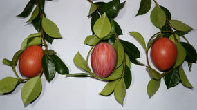Composição da Páscoa, ovos e galhos verdes Fotos de Stock Royalty Free