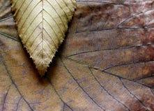 Composição da textura das folhas Fotografia de Stock Royalty Free