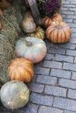 Composição das abóboras com feno em pavimentar o fundo foto de stock royalty free