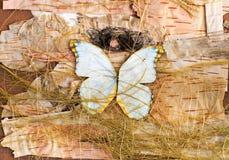 Composição das borboletas, da casca de vidoeiro e da palha Imagens de Stock