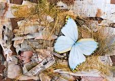 Composição das borboletas, da casca de vidoeiro e da palha Fotografia de Stock Royalty Free