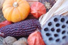 Composição das coisas do outono Fotos de Stock Royalty Free