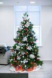 Composição das flores do Natal e de ano novo Fotos de Stock
