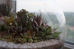 Composição das plantas carnudas no terrarium de vidro redondo imagens de stock