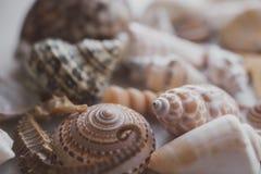 Composição de escudos exóticos do mar no fundo branco Vista ascendente próxima das conchas do mar diferentes empilhadas junto com fotos de stock royalty free