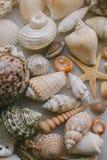 Composição de escudos exóticos do mar no fundo branco Vista ascendente próxima das conchas do mar diferentes empilhadas junto com fotos de stock