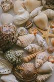 Composição de escudos exóticos do mar no fundo branco Vista ascendente próxima das conchas do mar diferentes empilhadas junto com imagem de stock royalty free