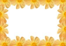 Composição de Flofal das dálias. Fotos de Stock