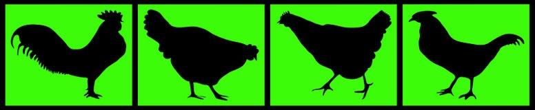 Composição de galinhas pretas Imagem de Stock Royalty Free