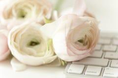 Composição denominada com ranunculos cor-de-rosa Imagens de Stock