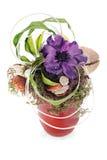 Composição do coco, da flor, das rochas e das videiras Fotos de Stock