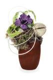 Composição do coco, da flor, das rochas e das videiras Fotos de Stock Royalty Free