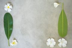 Composição do conceito do tratamento dos termas, fim acima do plumeria branco ou flores do frangipani no fundo de pedra com espaç imagens de stock royalty free