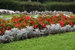 Composição do jardim fotos de stock royalty free