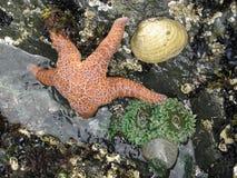 Composição do mar Foto de Stock Royalty Free
