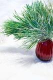 Composição do Natal com ramo do vaso e do pinho Fotografia de Stock Royalty Free