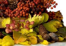 Composição do outono Fotografia de Stock