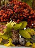 Composição do outono Foto de Stock