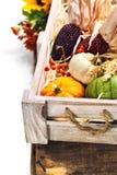 Composição do outono Fotos de Stock Royalty Free