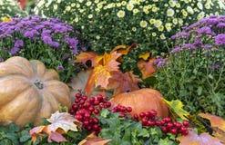 Composição do outono com abóboras, ásteres, bagas e folhas de bordo imagens de stock