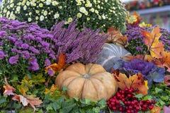 Composição do outono com abóboras, ásteres, bagas e folhas de bordo fotografia de stock royalty free