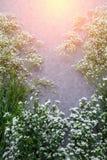 Composição do outono das folhas, das flores e das bagas na parte traseira de madeira Fotografia de Stock
