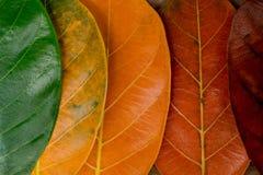 Composição do outono, folhas coloridas em seguido foto de stock royalty free