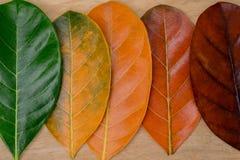 Composição do outono, folhas coloridas em seguido fotografia de stock