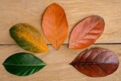 Composição do outono, folhas coloridas em seguido imagens de stock royalty free