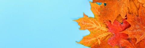 Composição do outono: Folhas de bordo brilhantes em um fundo azul com um bloco de notas branco Copie o espaço Configuração lisa V fotos de stock royalty free