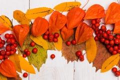 Composição do outono O quadro feito do outono secou as folhas no fundo branco Configuração lisa, vista superior, espaço da cópia fotos de stock