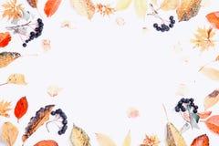 Composição do outono Quadro feito das folhas do outono e de bagas multi-coloridas secas do chokeberry no fundo branco outono ilustração stock