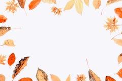 Composição do outono Quadro feito das folhas do outono e de bagas multi-coloridas secas do chokeberry no fundo branco outono ilustração royalty free