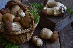 Composição do porcini na cesta no fundo de madeira Cogumelos selvagens comestíveis brancos copie o espaço para seu texto Fotos de Stock Royalty Free