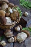 Composição do porcini na cesta no fundo de madeira Cogumelos selvagens comestíveis brancos copie o espaço para seu texto Imagem de Stock Royalty Free