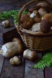 Composição do porcini na cesta no fundo de madeira Cogumelos selvagens comestíveis brancos copie o espaço para seu texto Fotos de Stock