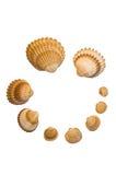 Composição do Seashell Imagem de Stock