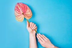 Composição do tratamento de mãos e da flor fotografia de stock
