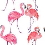Composição dos flamingos na moda do verão Aquarela tirada m?o ilustração do vetor