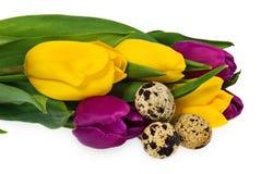Composição dos ovos da páscoa, flores, tulipas Ovos da páscoa no mult Fotografia de Stock