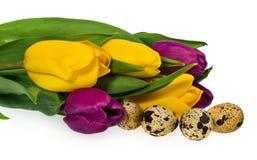 Composição dos ovos da páscoa, flores, tulipas Ovos da páscoa no mult Foto de Stock Royalty Free