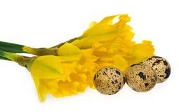 Composição dos ovos da páscoa, narcisos amarelos das flores Imagem de Stock Royalty Free