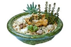 Composição dos succulents Fotos de Stock Royalty Free